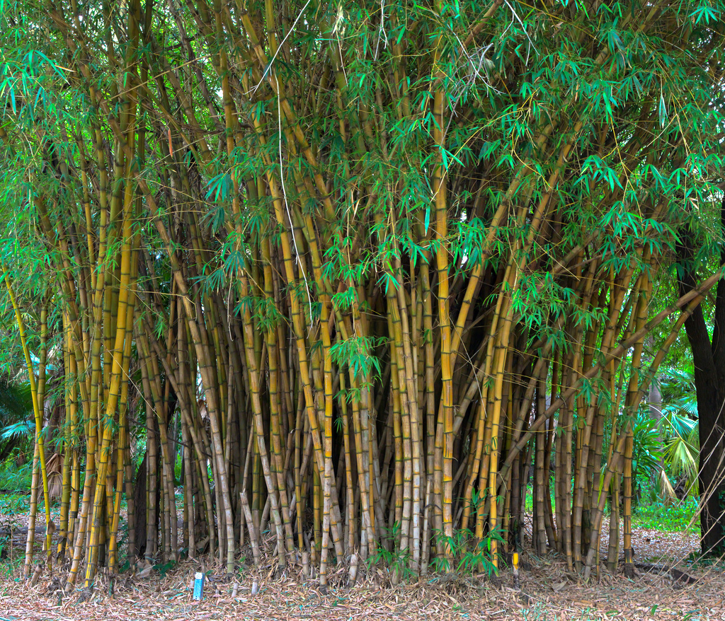Bamboo Sheets Shop Most Common Bamboo Questions