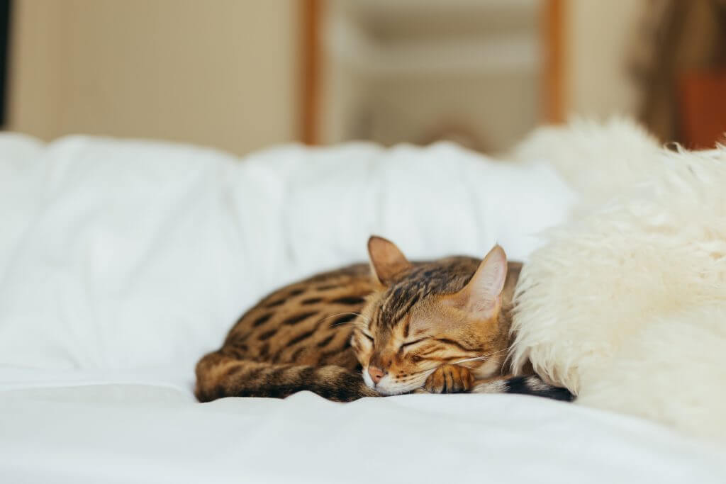 Cat sleeping on a bed, how to change a sleep schedule in a healthy way